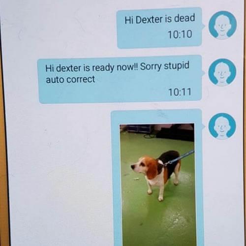 сообщение об умершем псе
