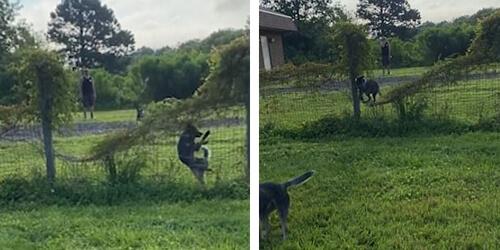 щенок врезался в ограду