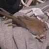 птичье гнездо в штанах