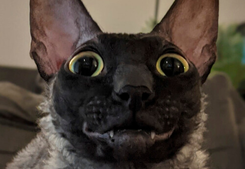 кот с клоунской улыбкой
