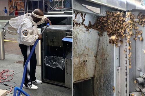 пчёлы в мусорных баках