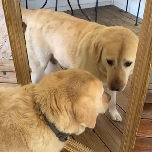 злейший враг в зеркале