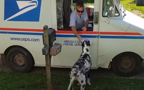 собака забирает почту