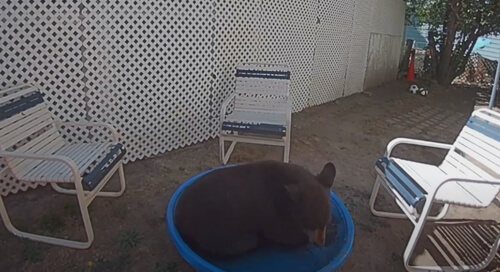 маленький бассейн для медведя