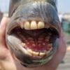 полный рот человеческих зубов