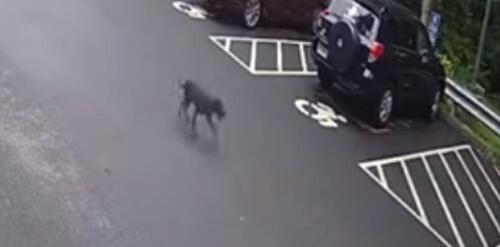 собака бежит на работу к хозяйке