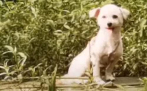 собака оказалась посреди реки