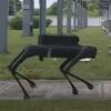 робот-собака на электростанции