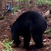 велосипедист отогнал медведя