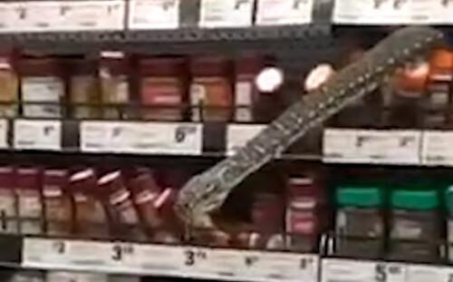 змея в отделе специй