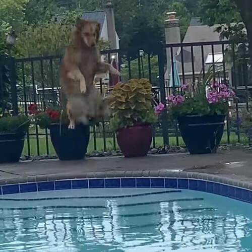 собака и страшная лягушка