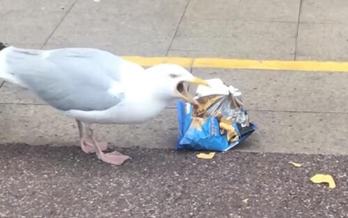 ограбление магазина ради чипсов