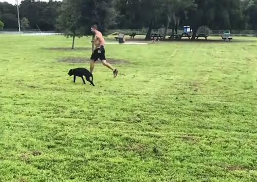 трёхногий терапевтический пёс