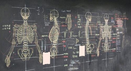 анатомические рисунки на доске