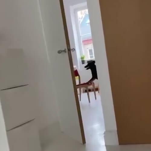собака добралась до еды на плите