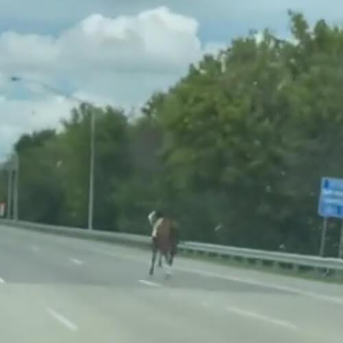 скаковая лошадь на трассе