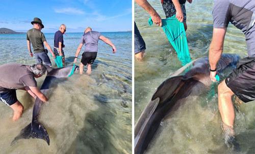 дельфин очутился на мелководье