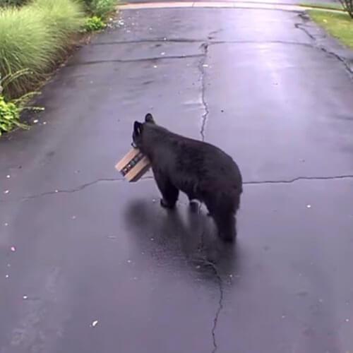 медведь с чужой посылкой