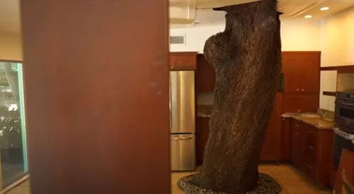 дерево растёт сквозь дом
