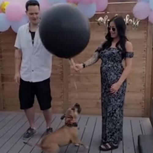 неловкий пёс на вечеринке