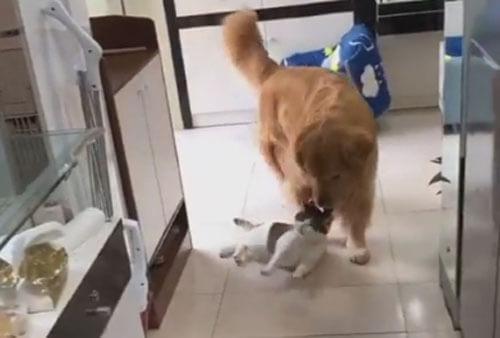 собака унесла кошку в дом