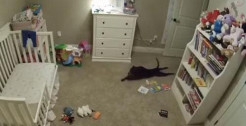 собака вползла в комнату