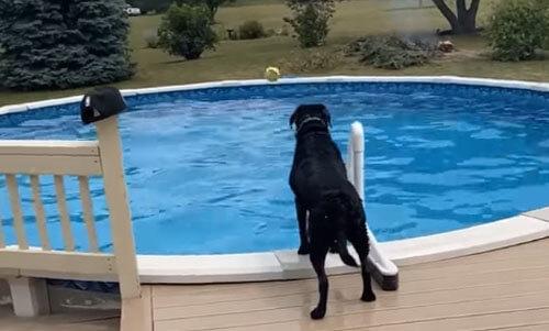 собака получила удар мячом
