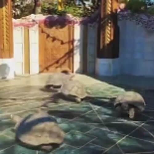 черепахи бегающие по кругу