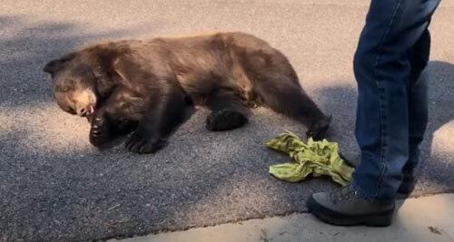 медведя выпустили на волю
