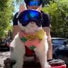 кошка в велосипедной корзинке