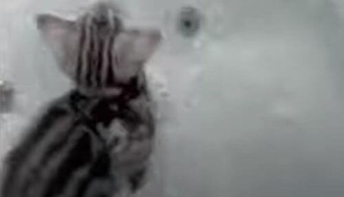 котёнок исследовал ванну и упал