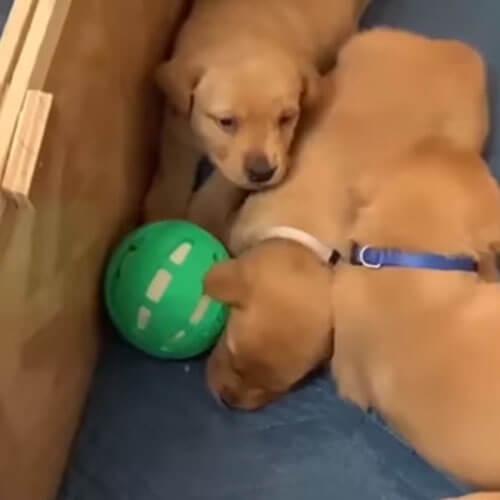 у собаки не слишком весёлые дети