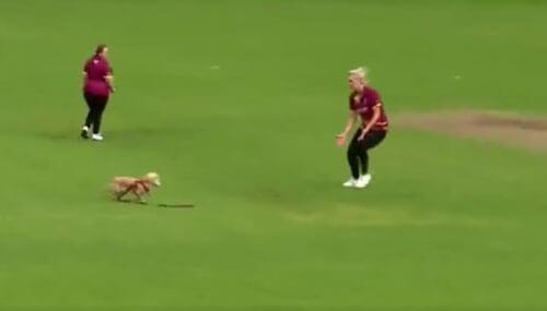 собака на игре в крикет