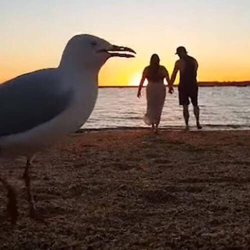 романтическое видео с чайками
