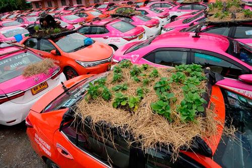 огороды на крышах автомобилей