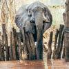слон напился из бассейна