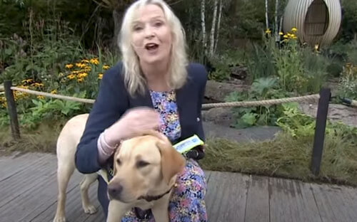 собака уронила журналистку