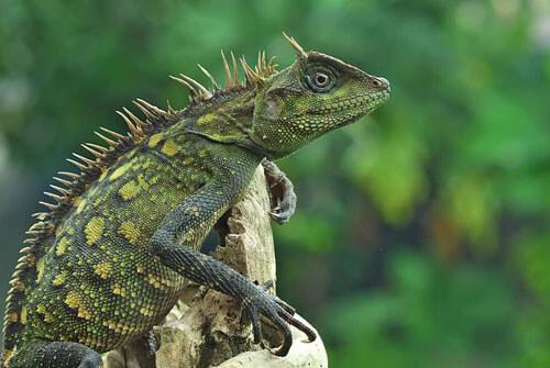 фотографии интересных рептилий