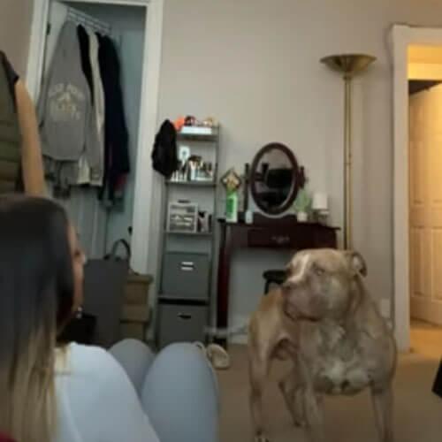 задыхающаяся хозяйка и её пёс