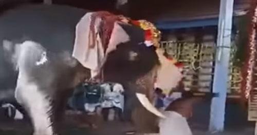 разгневанный слон в храме