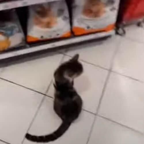 кот выпрашивает еду у покупателей