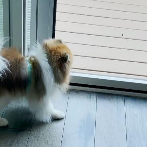 собака съела живую игрушку