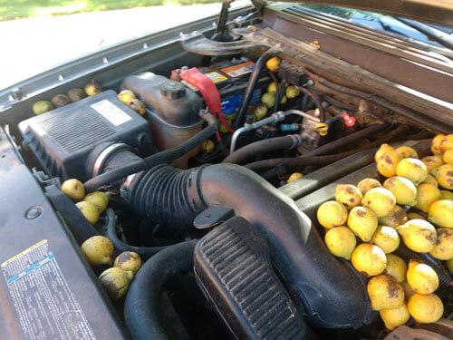 орехи спрятанные в машине
