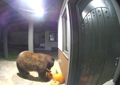 тыквенный ужин для медведя