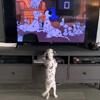 щенок и мультик с далматинами
