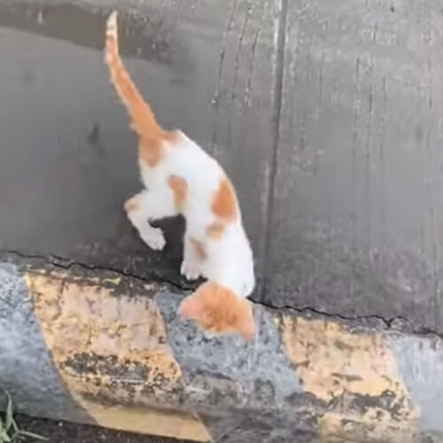 котёнок спасся с дороги