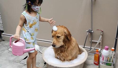 bath day for a dog