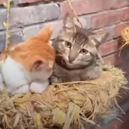 настенное искусство для кошек