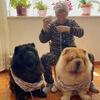 собаки помогают бабушке вязать