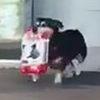 Собака научилась ходить в магазин и самостоятельно покупать себе корм